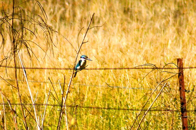 Bird Fence Billabong Mundubbera