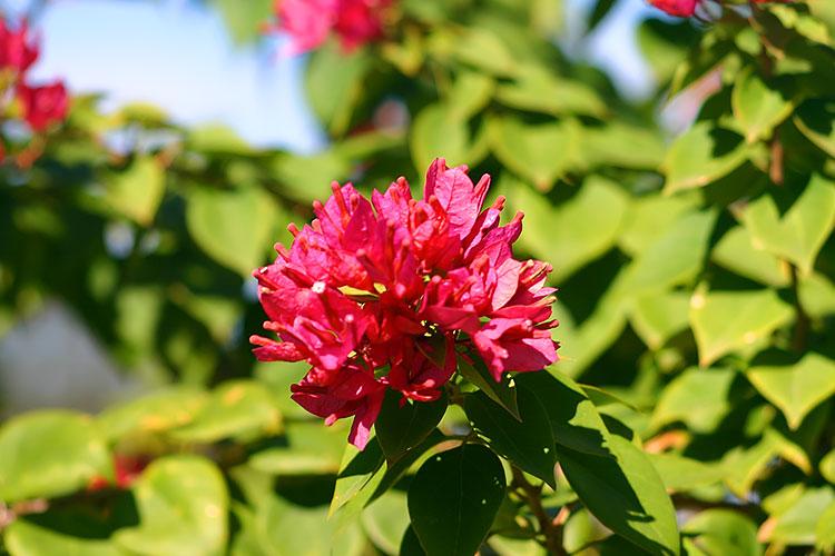 Flowers Billabong Mundubbera